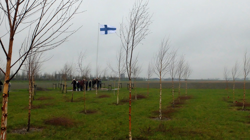 Birch saplings and Finnish flag on a grey winter's day.